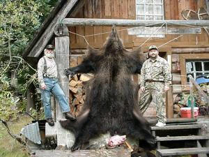 Southeast Alaska Bear